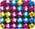 Cánh đồng hoa